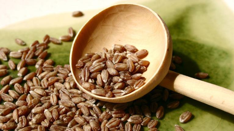 Dinkel – Uralte Getreideart mit hohem Nährwert