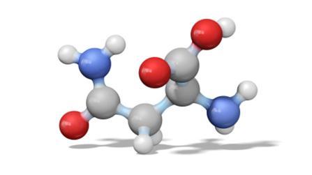 Aminosäuren, die den Stoffwechsel unterstützen