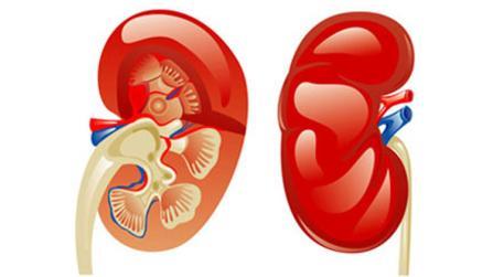 Der ultimative Hausputz für die Nieren