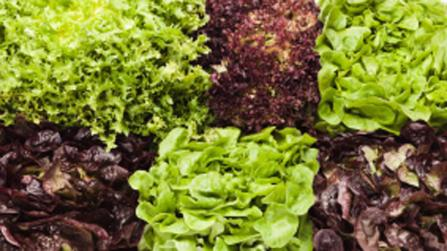 Sommersalate – knackig, bunt, gesund