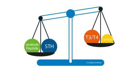 Ernährungsempfehlungen bei anaboler Stoffwechsellage