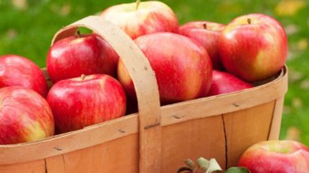Schlanker Sattmacher- aromatische (alte) Apfelsorten